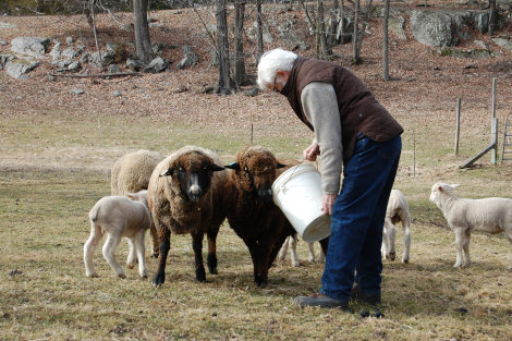 Albrecht from Morehouse Farm, with the ewes and lambs